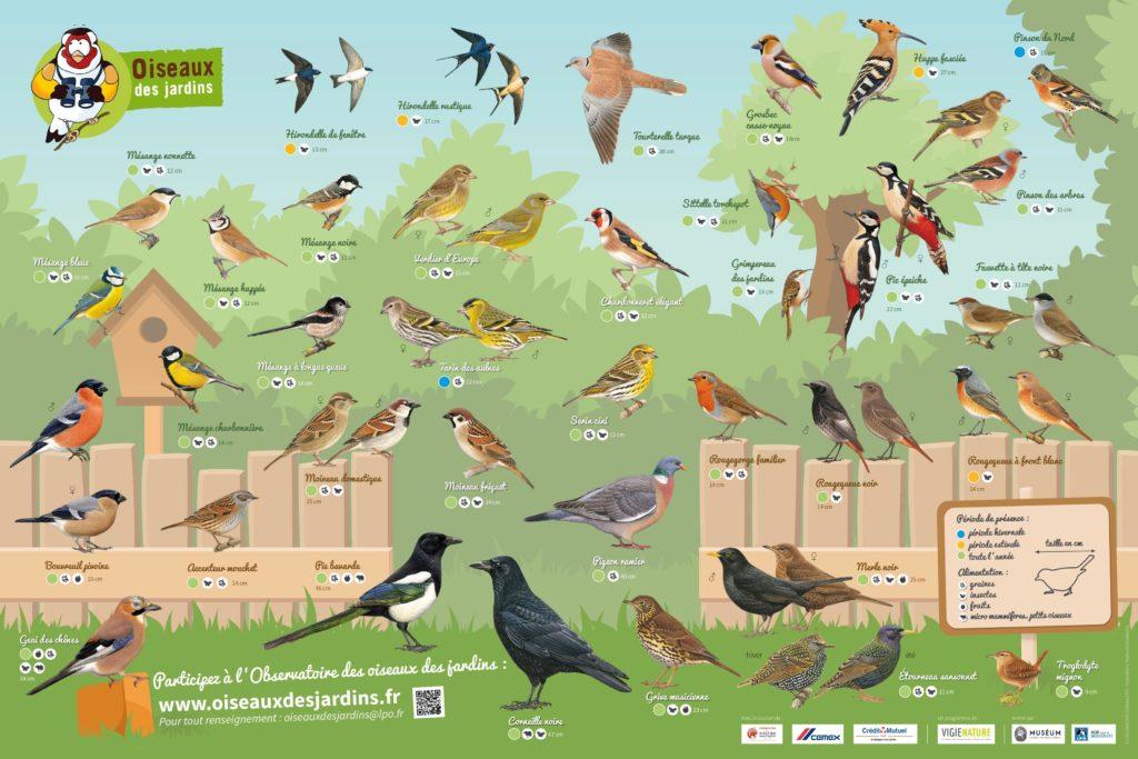 Les espèces d'oiseaux des jardins