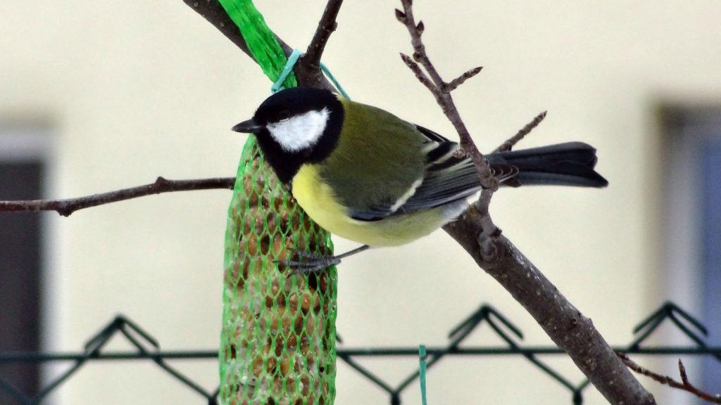 Les filets à graines un danger pour les oiseaux