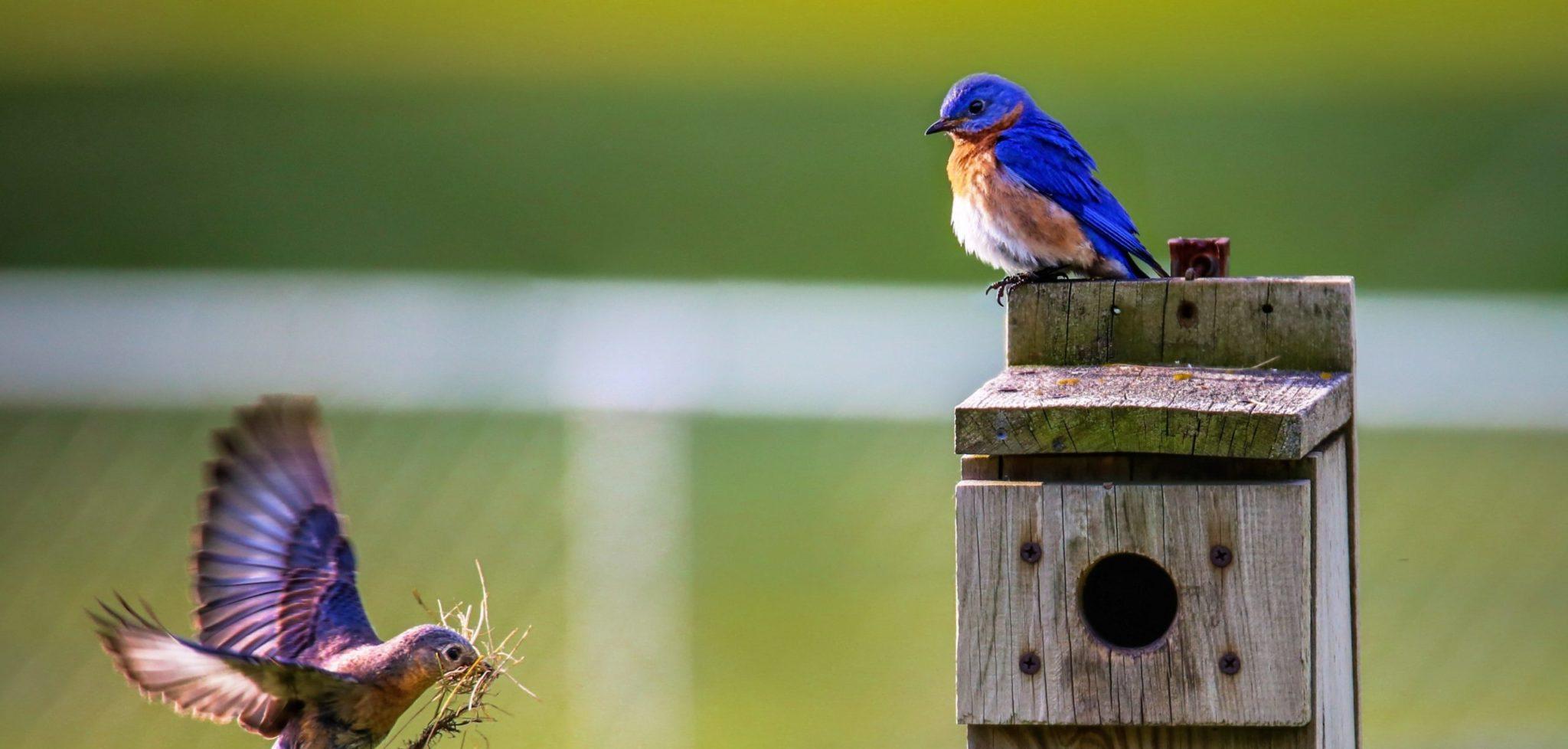 Protéger la planète, aidez les oiseaux