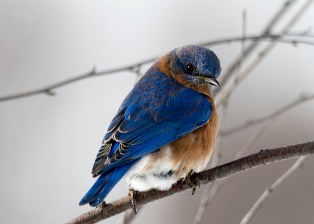 Activité écologique : observer les oiseaux avec ses enfants