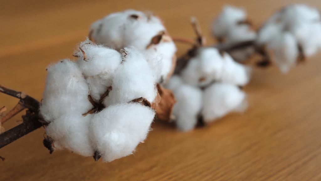 Le coton biologique une alternative écologique