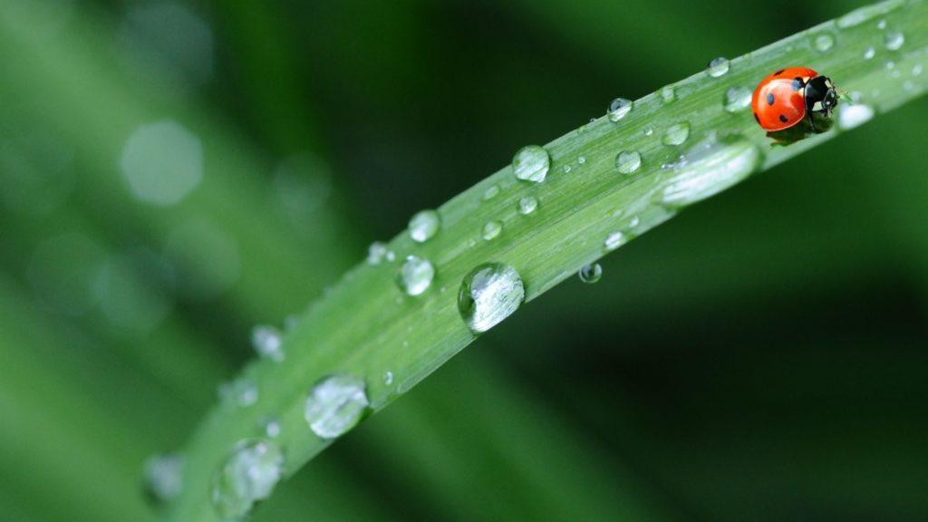 Limiter usage pesticides jardin écologique