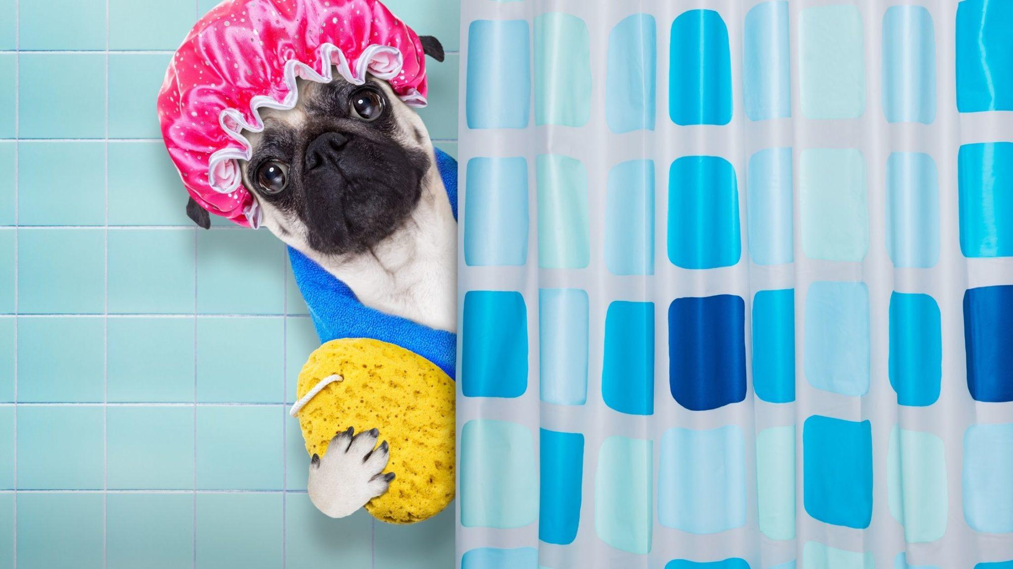 Faire pipi sous la douche écologique