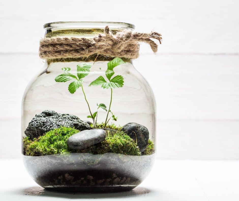 Activités famille : comment faire un terrarium ?